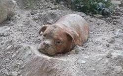 路过沙堆,发现狗狗被主人丢弃在沙土里