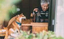 狗狗能活多久?世界上最长寿的柴犬活了26岁!
