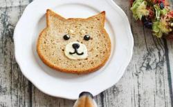 过敏体质的柴犬自制狗粮的好处