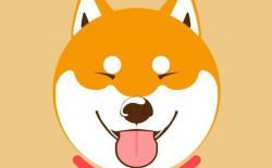 日本柴犬的特征详解,掌握了如何挑选就不会被卖家忽悠