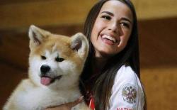 想养狗为什么推荐选择秋田犬——忠诚的生活伴侣