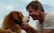 我很爱养狗,最爱的还是柴犬和秋田犬,见过的人越多就越喜欢狗