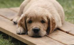 狗狗呕吐是怎么回事怎么办?呕吐的原因和处理办法