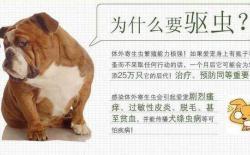 狗狗体内外怎么驱虫多久一次?全面了解狗狗驱虫知识