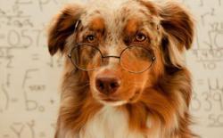 年纪大了的老年狗容易得什么病?