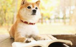 新手第一次养柴犬,需要买哪些狗狗必备用品?
