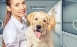 宠物医生一般要学几年?想开宠物店没学过兽医专业怎么办?