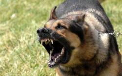 还说我家狗狗不咬人?没有绝不咬人的犬种,狗狗咬人都有原因的