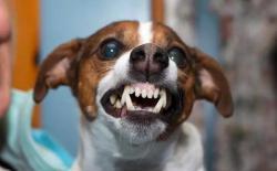 温度影响狗狗攻击性,狗狗越热越暴躁,夏天出行记得提防犬只咬伤