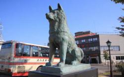 日本秋田县观光局邀请您来撸狗啦!