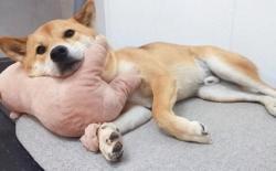狗狗老是挠皮肤,当心是过敏!狗狗过敏的症状及处理办法