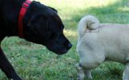 狗狗互相闻屁股是怎么回事,为什么喜欢闻别的狗的屁股?