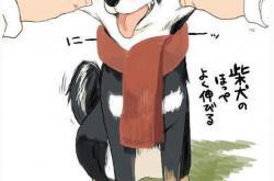 正宗纯种日本柴犬的价格、特征、挑选和购买途径推荐