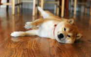 狗粮怎么喂才好,你确定真的喂对了吗?