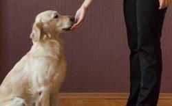 狗狗正面教育法(四):坐下冷静法