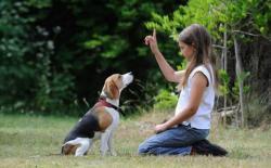 欧美主流的诱导式狗狗训练法介绍