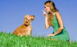 """狗狗的""""基本服从训练""""简介"""