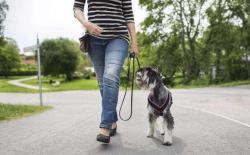 狗狗【脚侧随行】训练课程第一个月:慢步随行