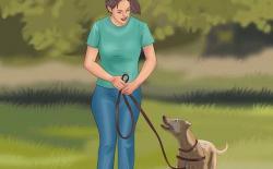 狗狗【脚侧随行】训练课程第二个月:步伐变化随行