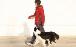 狗狗【脚侧随行】训练课程第四个月:无绳随行