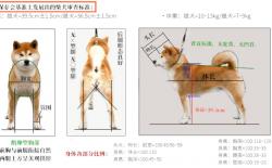 日本犬审查标准  (小型、柴犬篇)