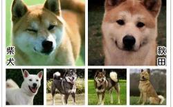 日本犬的6个种类/品种