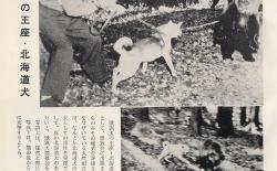 北海道犬读本杂志写真集