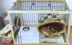 柴犬厕所篇(一):室内厕所的环境布置