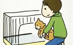 柴犬厕所篇(三):基本的如厕训练