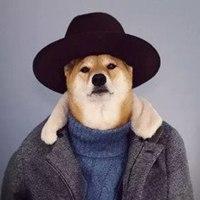 柴犬戴黑帽子严肃范男士微信头像