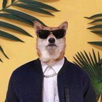 柴犬冷酷黑眼镜夹克衫头像男