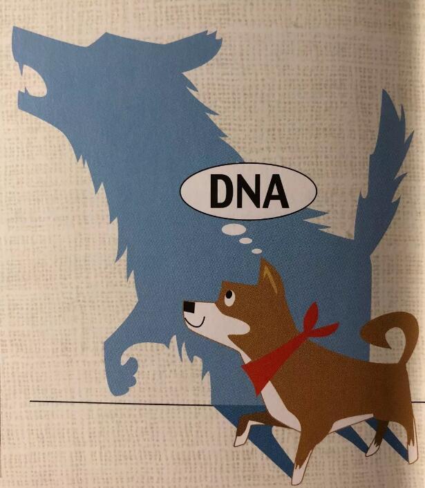 柴犬的DNA.jpg