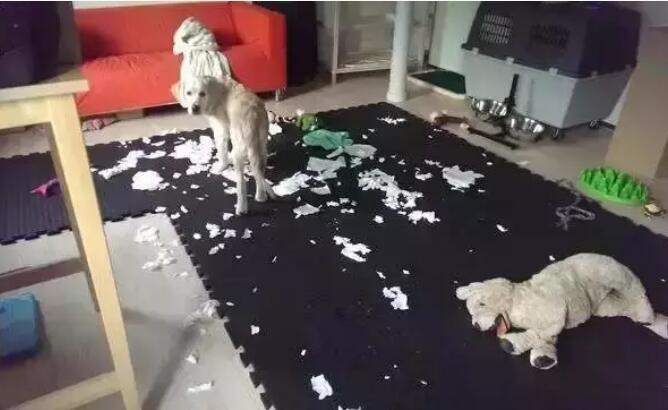 拆家的狗狗.jpg