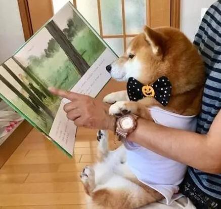 拥抱柴犬的练习.jpg