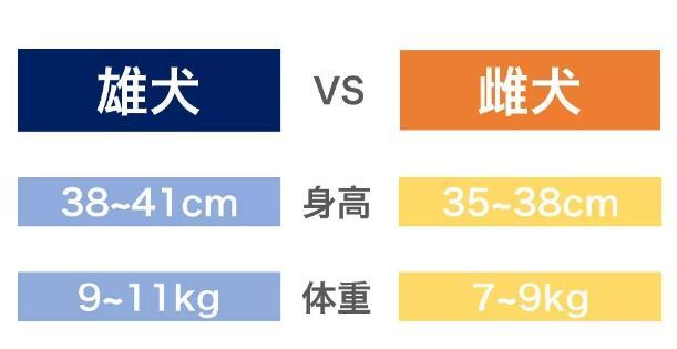 柴犬理想体重.jpg
