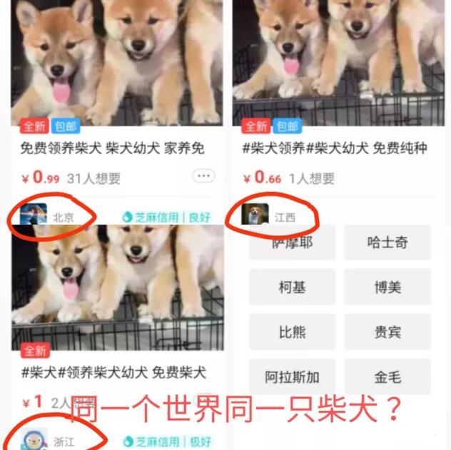 柴犬骗术2.jpg