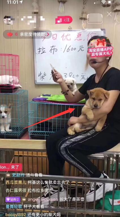 柴犬骗术9.jpg