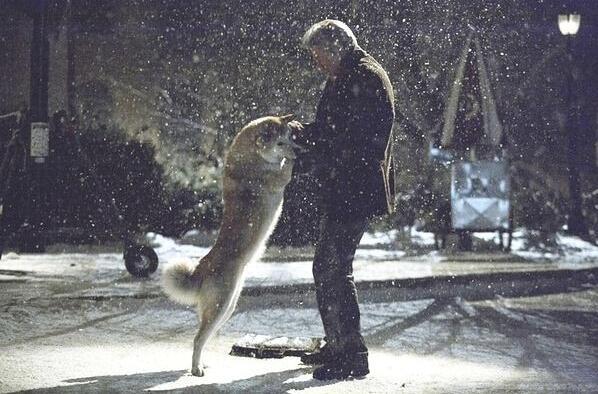 《忠犬八公的故事》剧照.jpg