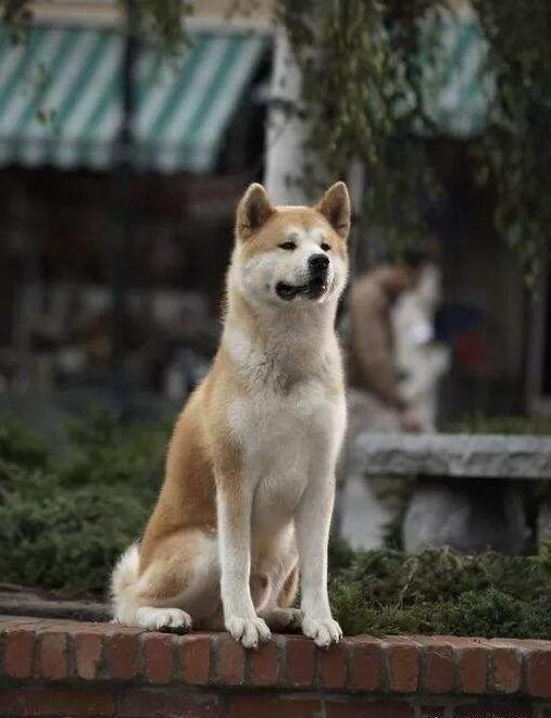 《忠犬八公的故事》剧照1.jpg