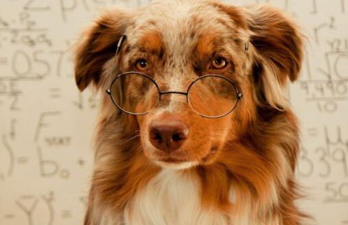 戴眼镜的老年狗狗.jpg