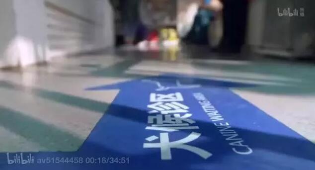 宠物纪录片《宠物医院》片段1.jpg
