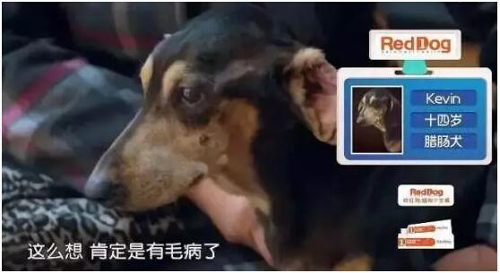 宠物纪录片《宠物医院》片段5.jpg