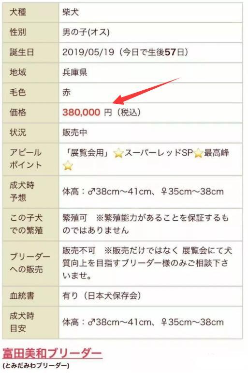日本柴犬价格信息明细.jpg