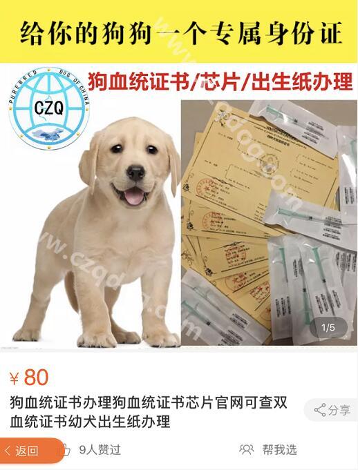 某宝的狗狗血统书.jpg