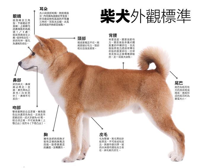 柴犬外观标准.jpg