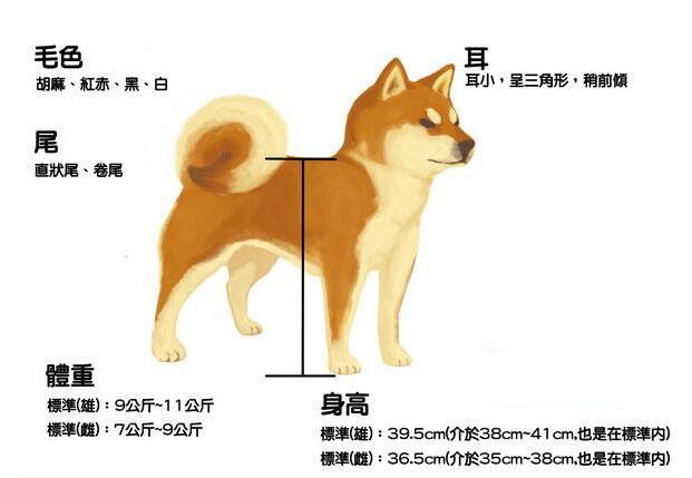 柴犬外观标准示意图.jpg