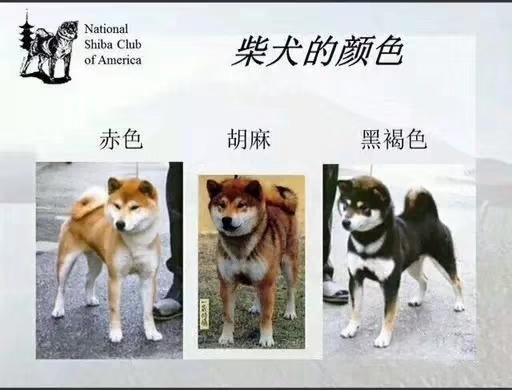 柴犬的几种颜色.jpg