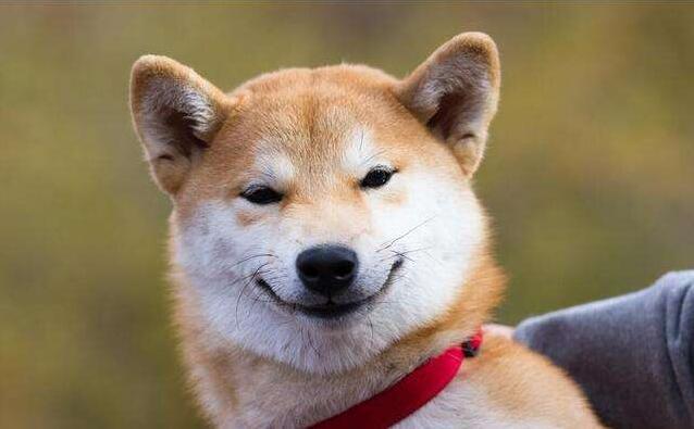 建立狗狗的信心和成就感.jpg