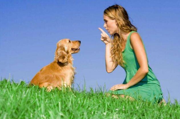 狗狗的基本服从训练.jpg