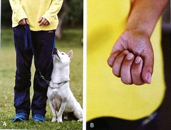 狗狗坐下训练1.jpg